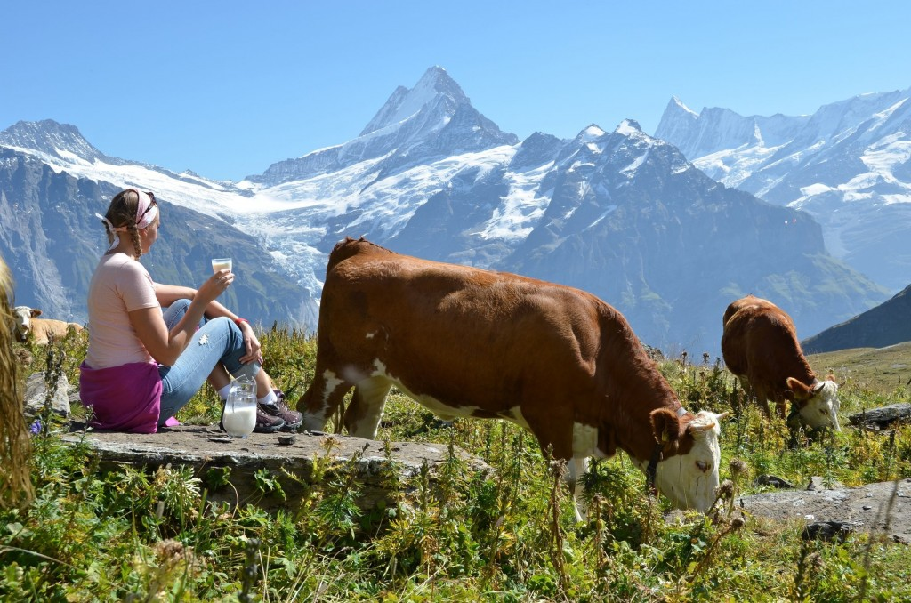 Home, Alps, Cow